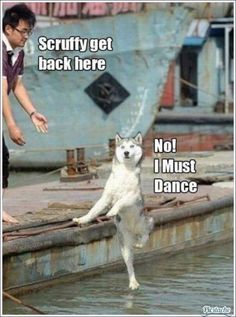 Aww cute dancing puppy