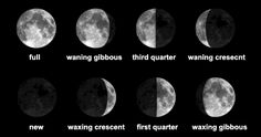 moon_phases.gif