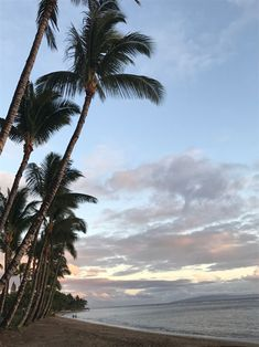 What town do you plan to stay in when you visit Maui? -- Here are some reasons why you should book your accommodations in Lahaina and make this area your home base on Maui. Click through for the details! Maui Hotels, Maui Resorts, Hotels And Resorts, Maui Accommodation, Maui Hawaii, Base, Ocean, Island, Vacation