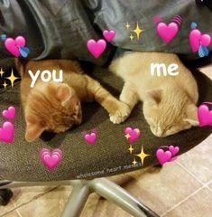 Cute cat memes, love memes, crush memes, wholesome memes, cute cats p Cute Cat Memes, Cute Love Memes, Funny Memes, Kittens Cutest, Cute Cats, Funny Cats, Sweet Kitten, Cute Baby Animals, Funny Animals