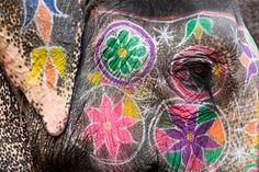 Painted Elephant - India - @ Michael Matlach