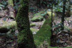 Trilha - Floresta da Tijuca