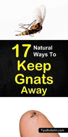 Find out how to keep gnats away with these simple, everyday remedies using inexpensive ingredients. Learn how to keep them from your face and how to get rid of them from your houseplants. #keepgnatsaway #repellent #keepgnatsfromface #gnatsaway