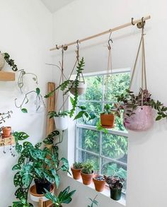 Room With Plants, House Plants Decor, Plant Decor, Hang Plants From Ceiling, Indoor Garden, Indoor Plants, Garden Bed, Decoration Plante, Plant Aesthetic