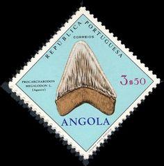 Shark Tooth - Angola