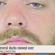 cool Jason Falbo geese: Fla. garden jockey mows over family of geese, Falbo speaks out