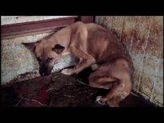 Samsung: Samsung:犬猫の惨殺根絶に協力を!Help us to end abhorrent cruelty and suffering of dogs in your country