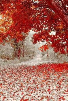 Autumn leaves and 1st snow.