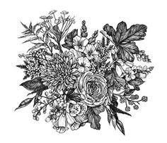 Drawn from reference bouquet made by Jackie Krejnik of Asrai Garden.   2015