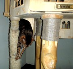 DomusfeliS - special playzones for cats - Unique pieces for unique cats, sculptures for cats, untreated precius wood: plum, apricot, poplar, birch, bamboo, oak and piracanta #catcastle #cattower #catcondo #playzones for cats #cattree #cattoy #catenclosure #catfrendlyhouse #petdesign #catforniture #catgift #catscratchforniture Plum Apricot, Cat Castle, Cat Enclosure, Cat Condo, Unique Cats, Cat Tree, Cat Gifts, Animal Design, Birch