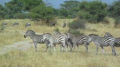 Safari por Kenia, Tanzania y Zanzibar 2013 Dedicado especialmente a nuestra guia Colleta, que hizo que nuestro viaje fuese espectacular!
