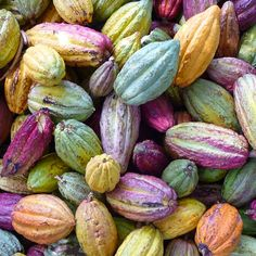 cacao/the motherlode