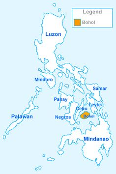 STROMBUS GIBBERULUS STROMBIDAE Specimen Sea Shell Picture (TS111936-PHILIPPINES - BOHOL , PANGLAO ISLAND)