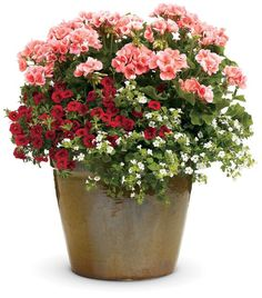 Pink or salmon geraniums, red million bells, white bacopa .choose different color, but the plant mix is a good one. Container Flowers, Flower Planters, Container Plants, Garden Planters, Container Gardening, Flower Pots, Succulent Containers, Fall Planters, Vegetable Gardening