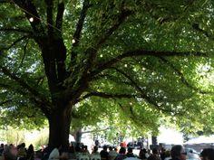 Launceston City Park: Festivale 2014. Article and photo for Think #Tasmania.