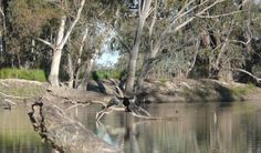 Katarapko Creek, in Murray River National Park. Only from Adelaide - a great place to go for an overnight kayaking trip. Great Places, Places To Go, Murray River, Canoe And Kayak, Vivarium, Kayaking, Exploring, National Parks, Australia