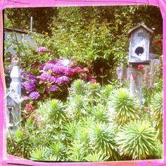 Bird houses in the garden