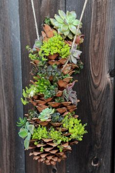 Regardless of your climate, this hanging succulent DIY project, which also uses pinecones, make a beautiful piece of greenery to hang indoors or out.