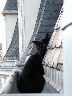 Being shy black cat