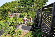 I Eiras trädgård var det så sankt att hon stod och grävde med vatten över stövelskaften. Nu finns här både pergola och koja, och trädgården har blivit en lekplats lika mycket för barn som för vuxna.