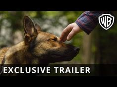 The new trailer for Max comes from the producers of Marley & Me and stars Stephen Amell's cousin Robbie Amell. This is sure to bring a tear to your eye. Military Working Dogs, Military Dogs, Best Movies To See, Max Movie, Dog Films, Marley And Me, Gung Ho, War Dogs, Drama
