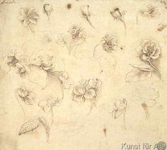 Leonardo da Vinci - Study of flowers