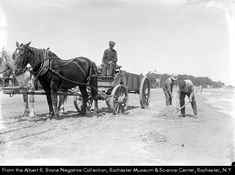 men rake up dead fish from the beach at Charlotte. Another man waits in a horse-drawn wagon to haul the fish away.  Subject(s):Beaches--New York (State)--Irondequoit.  Fish kills--Ontario, Lake (N.Y. and Ont.).  Fish--New York (State)--Rochester.  Parks--New York (State)--Rochester.  black-and-white negatives.  Notes: Stone photographic negative #12495 (RMSC), taken on the beach at Charlotte, was printed in the Rochester Herald, June 24, 1922