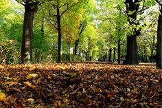 Autumn foliage by Rainer Leiss on 500px