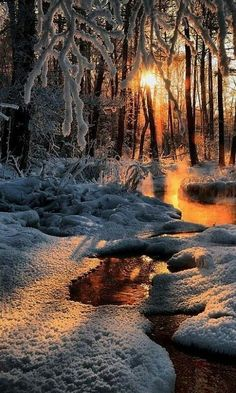 Ideas For Winter Landscape Photography Christmas Woods Winter Pictures, Nature Pictures, Beautiful Pictures, Sunrise Pictures, Beautiful Artwork, All Nature, Amazing Nature, Nature Tree, Nature Water