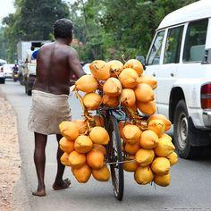 Sri Lanka - King Coconut