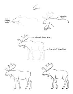 THIS WILL COME IN HANDY. TO ADD TO MY AMAZING SKILLS OF DRAWING MOOSES.
