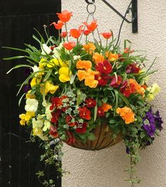 In this article we display a lis of the best Flowers to Use in Hanging Baskets. These flowers are a beautiful decoration for your house. Plants For Hanging Baskets, Hanging Pots, Hanging Flowers, Container Flowers, Container Plants, Container Gardening, Succulent Containers, Diy Garden, Garden Pots