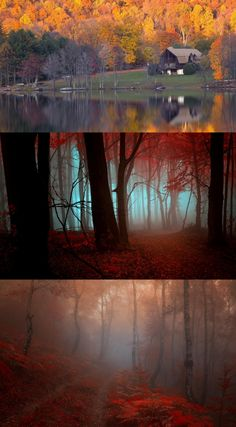 *** Mist in the autumn forest ***