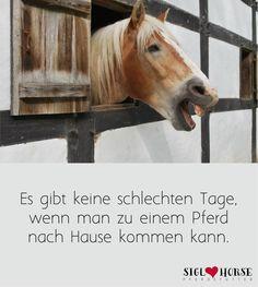 Es gibt keine schlechten Tage, wenn man zu einem Pferd nach Hause kommen kann. #pferde