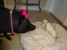 Therapy Pig Meets Abandoned Puppy And Falls In Love