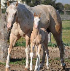 Ranch! Winchester Shotgun, Horses For Sale, Palomino, Animals, Ranch, Being Happy, Naturaleza, Horses, Guest Ranch