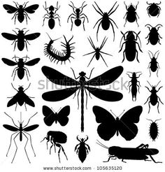stock vector : Insect collection - vector silhouette