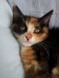 ASSO AFP - Google+ Armoire, Adoption, Google, Female, Fresh, Cat Breeds, Animaux, Clothes Stand, Foster Care Adoption