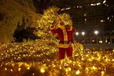 株式会社ニュー・オータニのプレスリリース(2016年11月9日 15時47分) ホテルニューオータニ(東京) 今週末開催!クリスマスライトアップ点灯式 #クリスマス #ホテル #Christmas