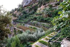 Amalfi Coast Mountainside Gardens, Italy