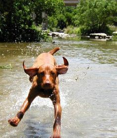 There's nothing like your dog running through water.