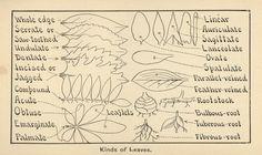 Vintage Flower guide book