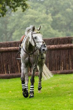 Burghley Horse Trials '14 Post tumble, there is still turf on his sweet face.