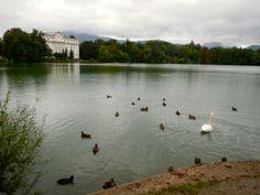 Swans at Schloss Leopoldskron