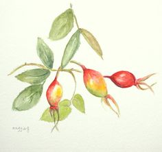 Roses & Rose Hips by Tina on Etsy
