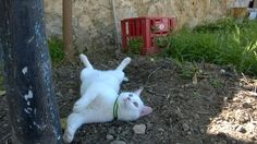 My cat, Teemo 💖