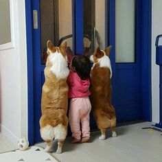 Things that make you go AWW! Like puppies, bunnies, babies, and so on. A place for really cute pictures and videos! Cute Funny Animals, Cute Baby Animals, Funny Dogs, Animals And Pets, Cute Corgi, Corgi Dog, Cute Puppies, Dog Pictures, Animal Pictures