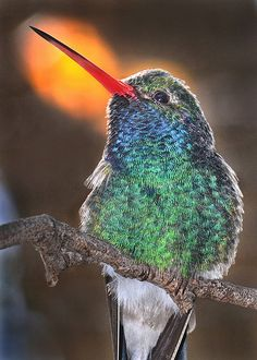 ~~ Little wing ~ hummingbird by Stinkersmell ~~