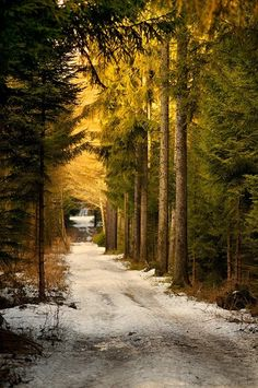 ~~~looks like my neck of the woods...in canada~~~Forest Road, Saxony, Germany