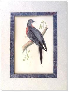 F.O. Morris- Passenger Peigon -1892  British Birds Woodblock Engraving Matted #Vintage123yearsold